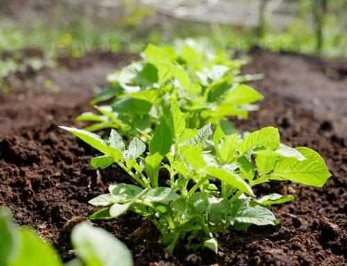 新型肥料是发展高效、绿色、可持续农业的必然要求