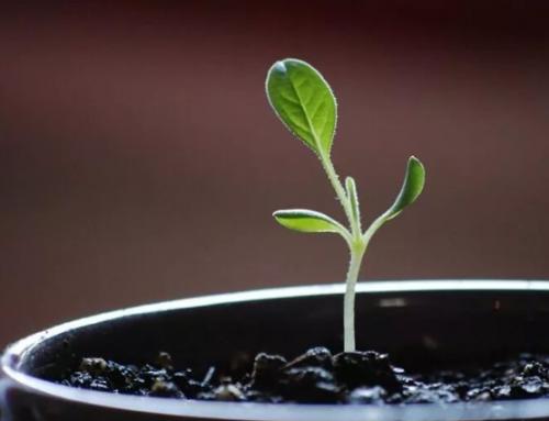 微生物肥料价格和花卉肥料价格区别