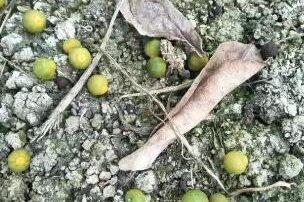 金满田生物肥