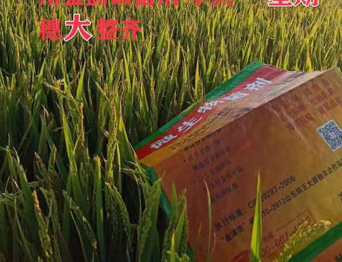 品牌肥料价格_高性价_金满田